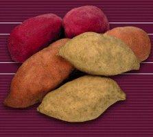 the sweet potato ipomoea batatas is a dicotyledonous plant which ...